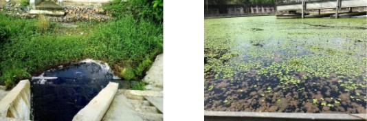 Nước thải từ trạm xử lý thải trực tiếp ra ngoài. Nước thải phát sinh mùi hôi khi chưa xử lý triệt để