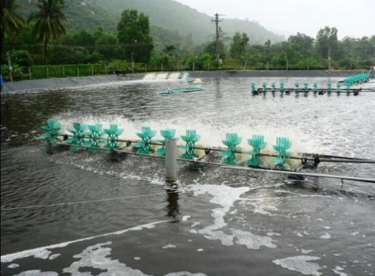 Cách xử lý khí độc trong ao nuôi tôm an toàn, tiết kiệm và hiệu quả?